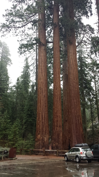 Sequoia National, CA