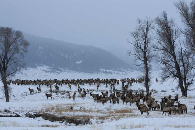 National_Elk_Refuge_(7467049882)